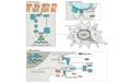 Nature 深度综述:抗衰老新热点——衰老细胞